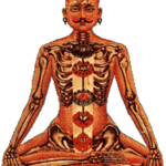 Os chakras e o corpo denso