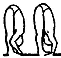 Padangusthasana e pada hastasana, em desenho por John Scott