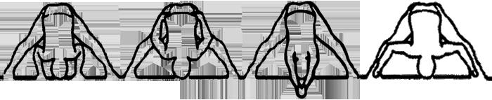 Prasarita padottanasana A, B, C e D, em desenho por John Scott