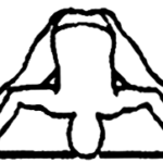 Prasarita padottanasana D, em desenho por John Scott