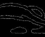 Paschimottanasana, em desenho por John Scott