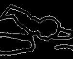 Ardha baddha padma paschimottanasana, em desenho por John Scott