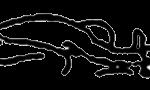 Triang mukhaekapada paschimottanasana, em desenho por John Scott