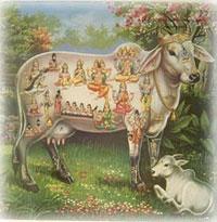 Kamadhenu, a vaca sagrada do deus Indra, na Mitologia Hindu