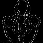 Garbha pindasana, a postura do embrião no útero, em desenho por John Scott