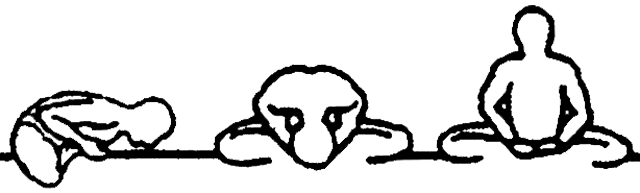 Baddha konasana A, B e C, em desenho por John Scott