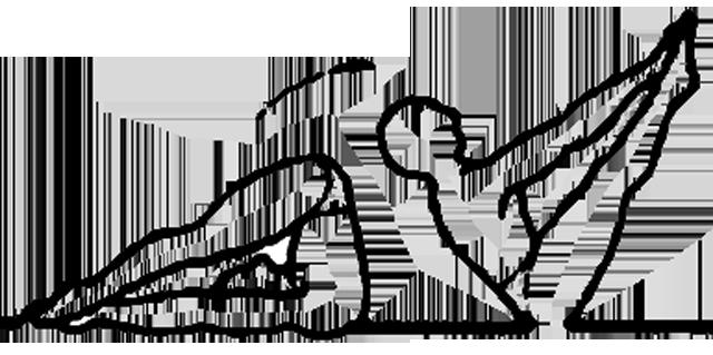 Ubhaya padangusthasana, a postura dos dois polegares nos pés, em desenho por John Scott